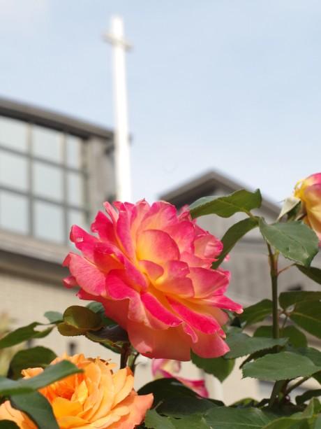 アンネのバラと神港教会